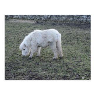 Regalos miniatura del caballo blanco postal