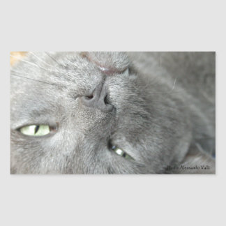 ¡Relájese! Pegatina rectangular de ronroneo gris