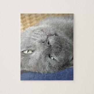 ¡Relájese! Rompecabezas de ronroneo gris del gato
