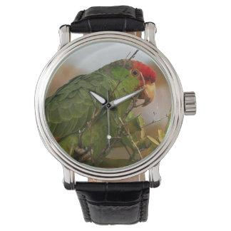 Reloj animal de la fauna del pájaro del loro del