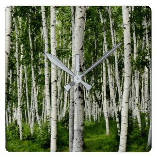 Reloj Cuadrado Bosque hermoso del árbol de abedul