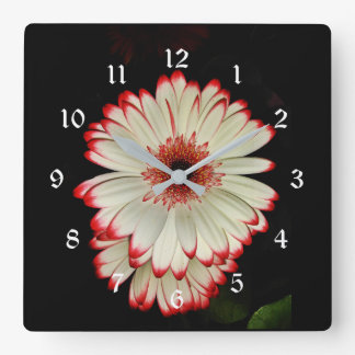 Reloj Cuadrado Dos flores blancas de la margarita del Gerbera