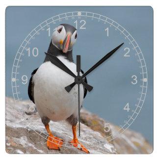 Reloj Cuadrado Frailecillo derecho