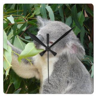 Reloj Cuadrado Koala que come la hoja de la goma