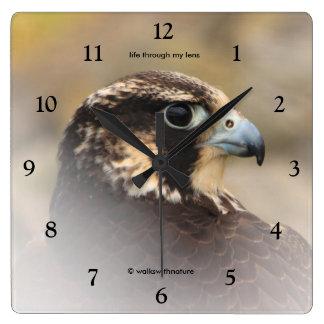 Reloj Cuadrado Perfil de Vignetted de un halcón de peregrino