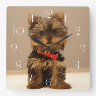 Reloj Cuadrado Perro de perrito de Yorkshire Terrier