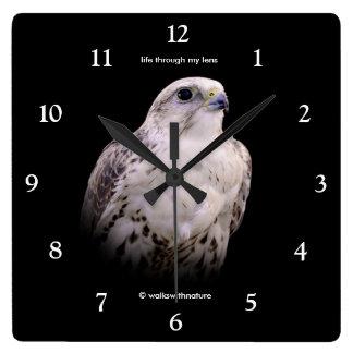 Reloj Cuadrado Retrato de un halcón inquisitivo de Saker