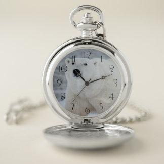 Reloj De Bolsillo Oso polar
