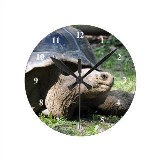 Reloj de la tortuga 586