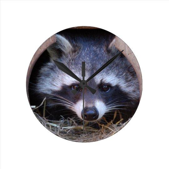 reloj de mapache