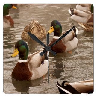 Reloj de pared de la foto del pato del pato