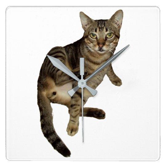 Reloj De Pared  Gato  Encantador