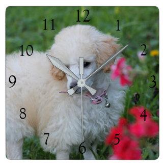 Reloj del cuadrado del caniche de juguete