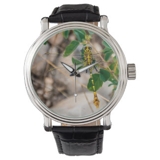 Reloj Libélula en el Tejas Wilds