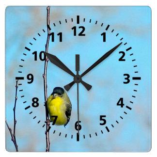 Reloj - pinzón amarillo