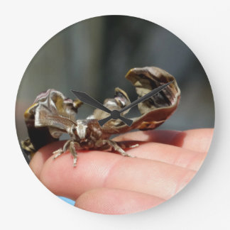 Reloj redondo del insecto de la foto de la