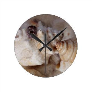 Reloj Redondo Mediano Cáscaras