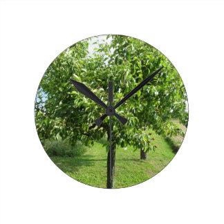 Reloj Redondo Mediano Peral con las hojas del verde y las frutas rojas