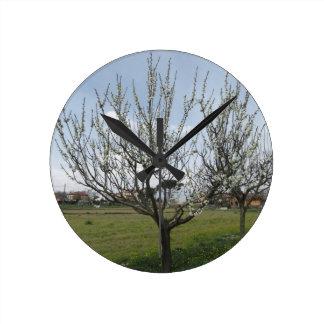 Reloj Redondo Mediano Peral floreciente en el jardín Toscana, Italia
