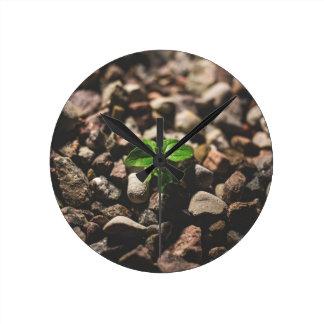 Reloj Redondo Mediano Planta frondosa verde que comienza a crecer en los