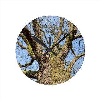 Reloj Redondo Mediano Roble de la visión inferior sin las hojas en