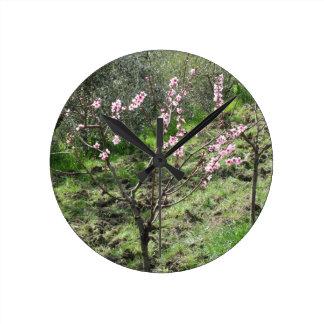 Reloj Redondo Mediano Solo árbol de melocotón en flor. Toscana, Italia