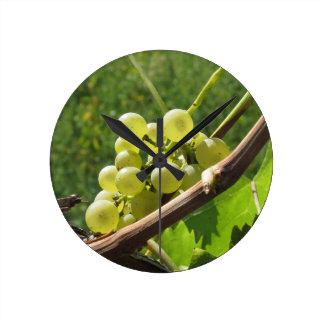 Reloj Redondo Mediano Uvas blancas en la vid. Toscana, Italia