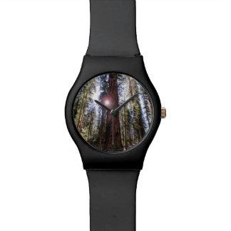 Reloj Sunlit del bosque