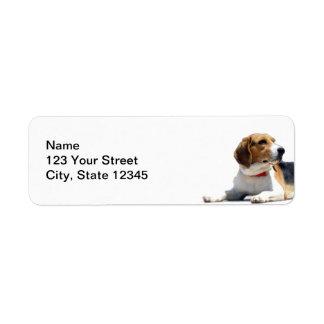 Remite de Brown negro y del perro blanco del Etiqueta De Remitente