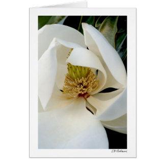 Remolino de la magnolia tarjeta de felicitación