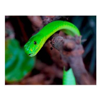 Reptil de la serpiente postal
