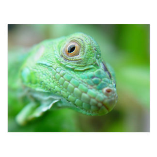 Reptil verde del lagarto de la iguana en la postal