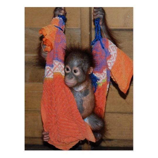 Rescate dulce del orangután del bebé postal