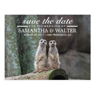 Reserva adorable de Meerkats la fecha Postal