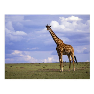 Reserva del juego de Kenia, Mara del Masai. Jirafa Postal
