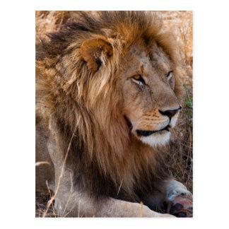 Reserva nacional de Maasai Mara del león, Kenia Postal