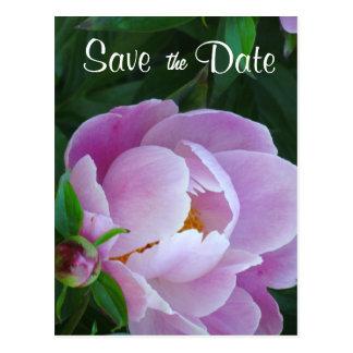 Reserva rosada del Peony la postal de la fecha