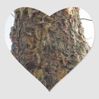 Resina del árbol de pino en el tronco pegatina en forma de corazón
