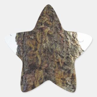 Resina del árbol de pino en el tronco pegatina en forma de estrella