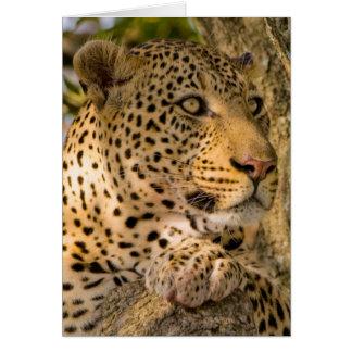 Restos adultos del leopardo (Panthera Pardus) Tarjeta De Felicitación