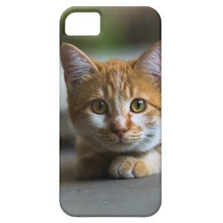 Retrato anaranjado del gato de tabby funda para iPhone SE/5/5s