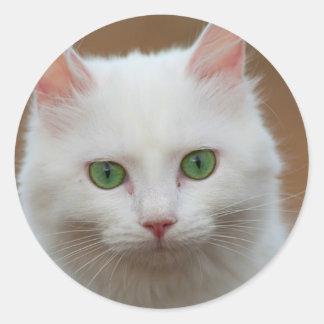 Retrato blanco de ojos verdes hermoso del gato pegatina redonda
