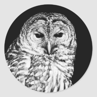 Retrato blanco y negro del búho barrado pegatina redonda