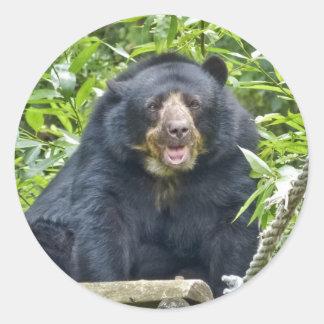 Retrato con gafas del oso del rugido pegatina redonda