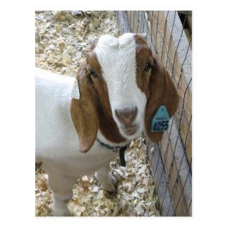 Retrato de la cabra postal