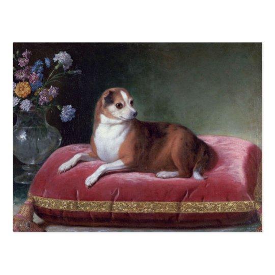 Retrato de la chihuahua del vintage postal