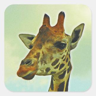 Retrato de la jirafa pegatina cuadrada