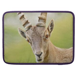 Retrato de un cabra montés funda para MacBook