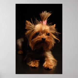 Retrato de Yorkshire Terrier Póster
