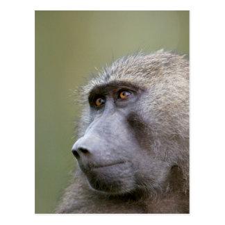 Retrato del babuino verde oliva adulto (anubis del postal